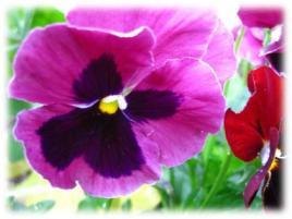 100311_2239_Spring3.jpg