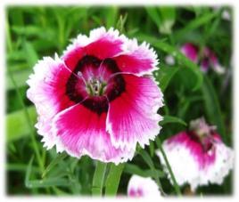 100311_2239_Spring4.jpg