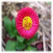 100311_2239_Spring6.jpg
